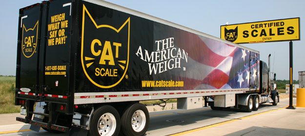 homepage_catscale